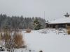 snow on treews