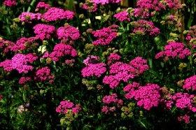 flowers]